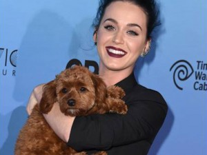 Những sao Hollywood  phát cuồng  vì chó