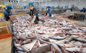 Thị trường - Tiêu dùng - Dè dặt bán cá tra vào Mỹ