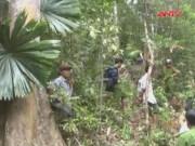 """Video An ninh - Rừng phòng hộ tại Quảng Nam lại bị lâm tặc """"xẻ thịt"""""""