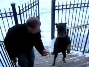Bạn trẻ - Cuộc sống - Clip chó leo bậc cầu thang bằng 2 chân cực đỉnh