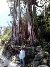 Tin tức trong ngày - Vẻ đẹp kỳ vĩ của 4 loài cây Di sản trên đất Cù Lao Chàm