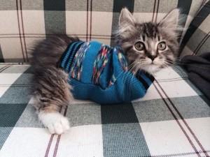 Phi thường - kỳ quặc - Cận cảnh cô mèo đáng yêu chỉ có 2 chân