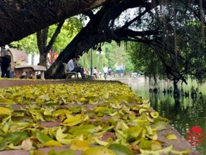 Tin tức trong ngày - Hà Nội đẹp dịu dàng mùa lá rụng