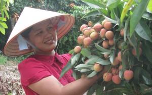 Thị trường - Tiêu dùng - Mỹ - thị trường lớn cho nông sản Việt