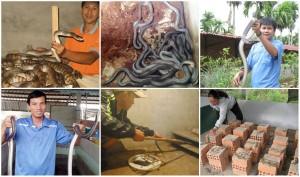 """Thị trường - Tiêu dùng - Những chiêu nuôi rắn độc đáo """"hái ra tiền"""" từ Nam chí Bắc"""