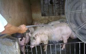 Thị trường - Tiêu dùng - Muôn kiểu chống nóng cho vật nuôi, cây trồng