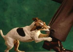 """Sức khỏe đời sống - Bị chó dại cắn: """"Không được tự ý chữa bằng thuốc nam"""""""