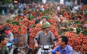 Thị trường - Tiêu dùng - Sản xuất, tiêu thụ nông sản: Vẫn đùn đẩy trách nhiệm!