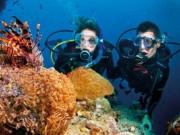 Du lịch - Ngắm san hô và đáy biển kỳ thú ở Cù Lao Chàm