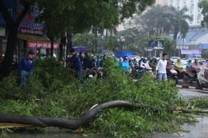 Công bố kết luận thanh tra vụ chặt cây xanh ở HN