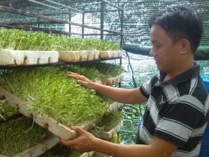Thị trường - Tiêu dùng - Bỏ việc ở trường đại học để làm rau sạch
