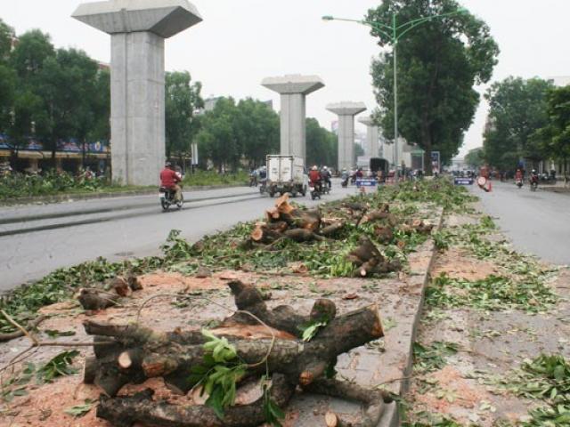 Vụ chặt cây xanh ở Hà Nội: Kiểm điểm lãnh đạo thành phố