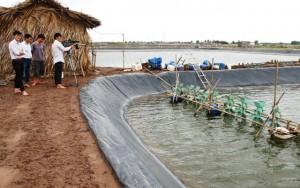 Thị trường - Tiêu dùng - Giá tôm giảm mạnh, nông dân bỏ đầm