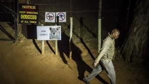 Thế giới - Nữ du khách bị sư tử vồ chết trong công viên Nam Phi