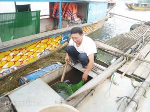Thị trường - Tiêu dùng - Kì diệu nghề nuôi loài cá có tên trong Sách đỏ Việt Nam