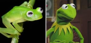 Phi thường - kỳ quặc - Sửng sốt trước loài cóc, ếch, nhái dị nhất hành tinh