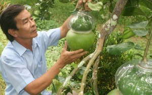 Thị trường - Tiêu dùng - Ba thương hiệu nông sản tiền tỷ