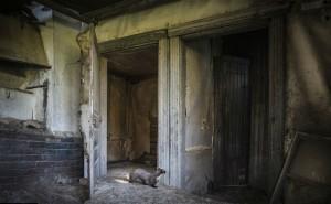 An ninh Xã hội - Hai vợ chồng chết bất thường trong căn nhà đầy vết máu