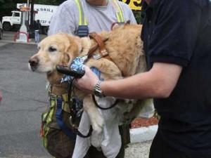 Tin tức trong ngày - Mỹ: Chú chó xả thân lao vào xe bus cứu chủ