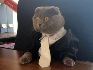 """Phi thường - kỳ quặc - Đánh bại 700 người, chú mèo """"lên chức"""" giám đốc truyền thông"""