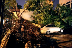 HN: 2 người chết, 700 cây đổ vì trận cuồng phong