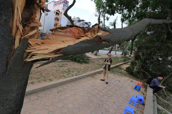 HN: 3 ngày sau dông lốc, cây đổ vẫn ngổn ngang trên đường