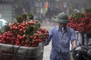 Tin tức Việt Nam - Dân Bắc Giang đội nắng, dầm mưa đi bán vải