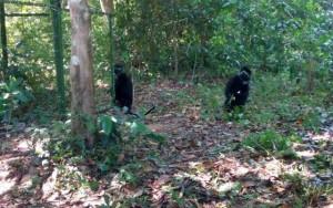 Tin tức trong ngày - Thả 5 cá thể voọc quý hiếm về rừng