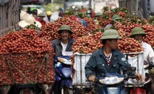 Thị trường - Tiêu dùng - Vải đỏ đường Bắc Giang, nông dân bị ép giá