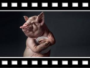 """Có một thời ta đã sống (11): Xem phim """"con lợn"""""""
