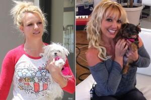 Britney Spears chi hơn nửa tỉ cho chó cưng