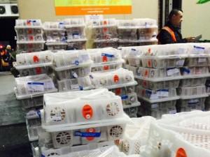 Thị trường - Tiêu dùng - Việt Nam xuất gần 17 tấn vải thiều sang Úc
