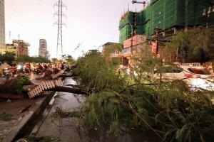 Tin tức trong ngày - Hà Nội lên phương án ứng phó cây đổ khi mưa bão