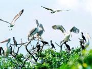 Du lịch - Khám phá nét đặc trưng về du lịch sinh thái Bạc Liêu