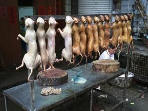 Phi thường - kỳ quặc - 13 món ăn kinh dị nhất thế giới