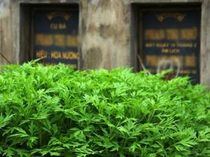 Tin tức trong ngày - Hãi hùng: Rau xanh mơn mởn trên những nấm mồ giữa Thủ đô