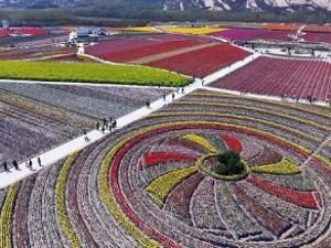 Du lịch - TQ: Vườn tulip khổng lồ đẹp kinh ngạc từ trên cao