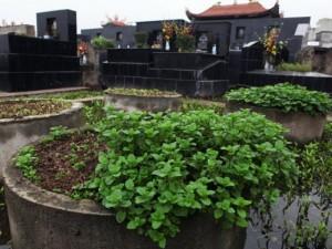 """Tin tức trong ngày - """"Ăn rau trồng ở nghĩa địa dễ mắc bệnh"""""""
