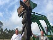 Phi thường - kỳ quặc - Bắt cá sấu nặng gần 300 kg ngay trong ao nhà