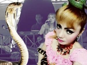 Ca nhạc - MTV - Ca sĩ bị rắn cắn vẫn hát 45 phút trước khi qua đời