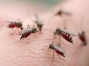 Sức khỏe đời sống - Virus Zika có thể gây liệt và tàn tật vĩnh viễn?