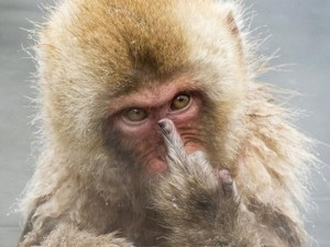 """Thế giới - Khỉ giơ """"ngón tay thối"""" vì bị chụp trộm khi tắm"""