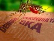 Sức khỏe đời sống - Phát hiện Virus Zika có thể tấn công cả não người lớn