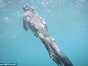 """Thế giới - Video: Ngắm """"Godzilla dưới biển"""" bơi lượn như rắn"""