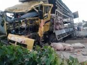 Tin tức trong ngày - Gần 100 chú heo nằm chết la liệt sau vụ tai nạn