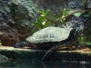 Phi thường - kỳ quặc - Giấu 51 con rùa trong quần, lĩnh án tù 5 năm
