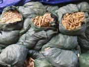 Thị trường - Tiêu dùng - Phát hiện 20 tấn măng tươi ủ lưu huỳnh cực độc