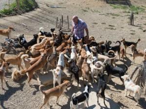Thế giới - Người đàn ông ở trong chuồng cùng 150 con chó