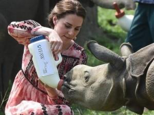 Thế giới - Tê giác bị bắn chết dã man sau khi Công nương Anh cho ăn