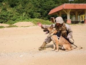 Thế giới - 20 điều thú vị về lính 4 chân trong quân đội Mỹ